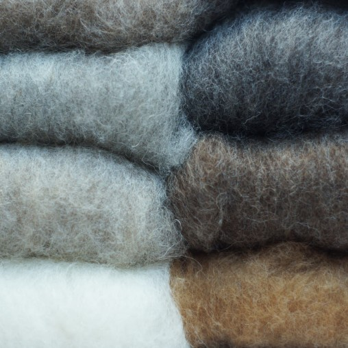 Mountain sheep wool in...