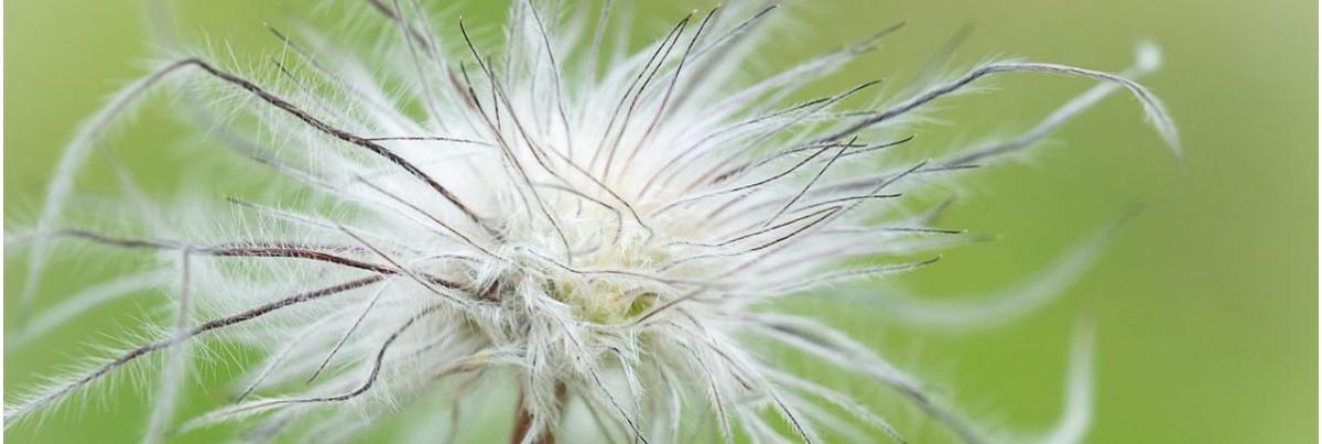 Nichttierische Fasern zum Filzen und Basteln
