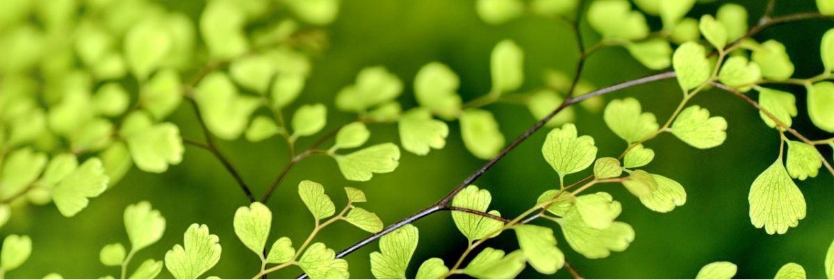 Filzwolle und vegane Fasern in herrlichen Grünen