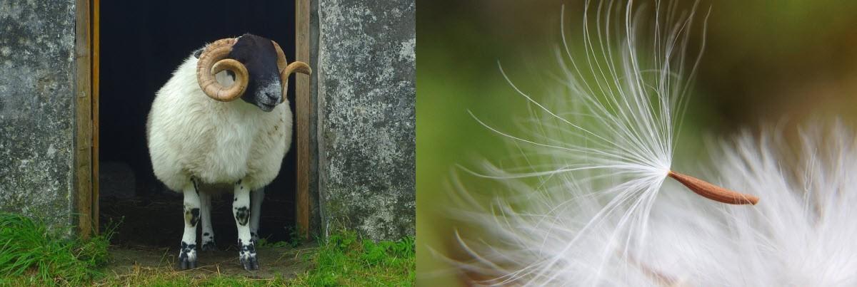 Wunderbare Mixsets mit unterschiedlichen Wollen und Pflanzenfasern zum Filzen